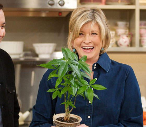 martha stewart holding a marijuana plant